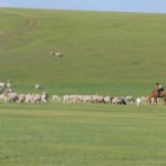 曹操の愛馬 絶影とはどんな馬だった? 当時の軍馬の秘密